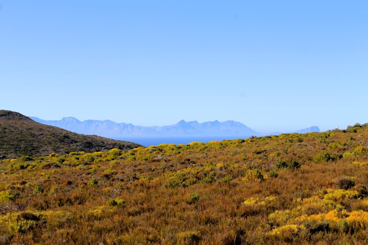 The Cape Point section of Table Mountain National Park