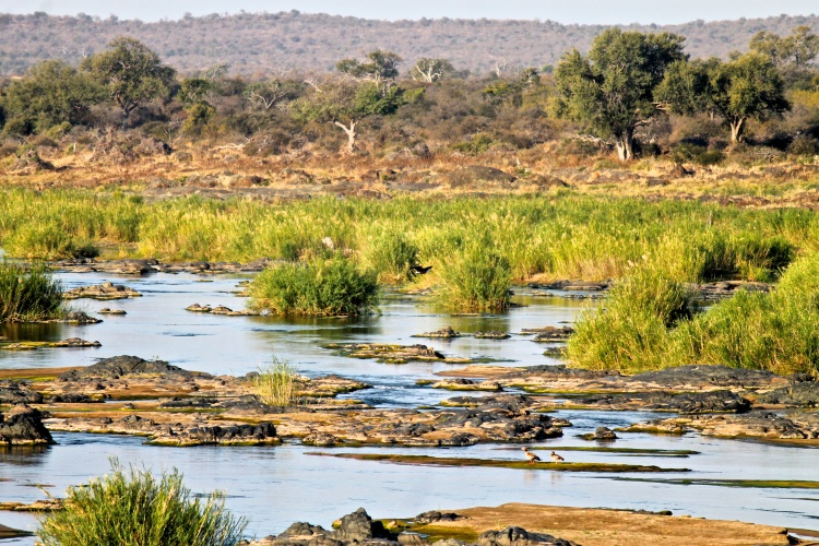 Taken on a bridge over the Sabie river.