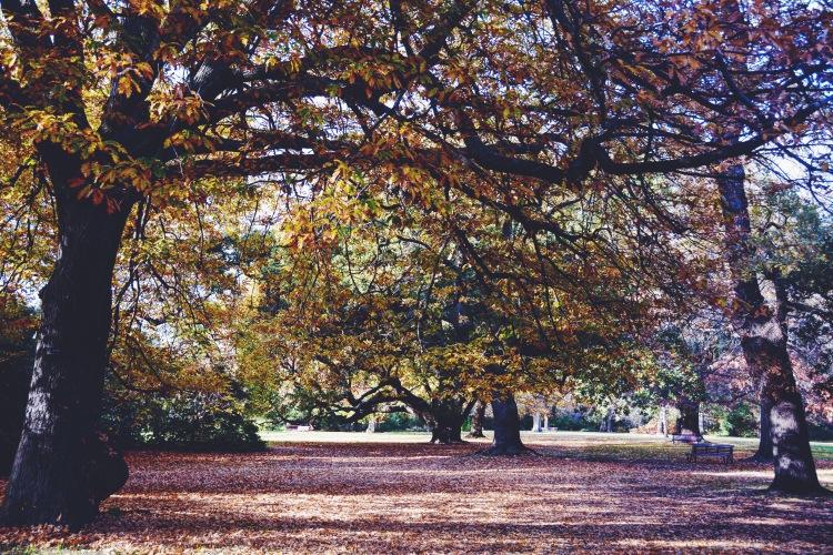 Royal Botanic Gardens Victoria.