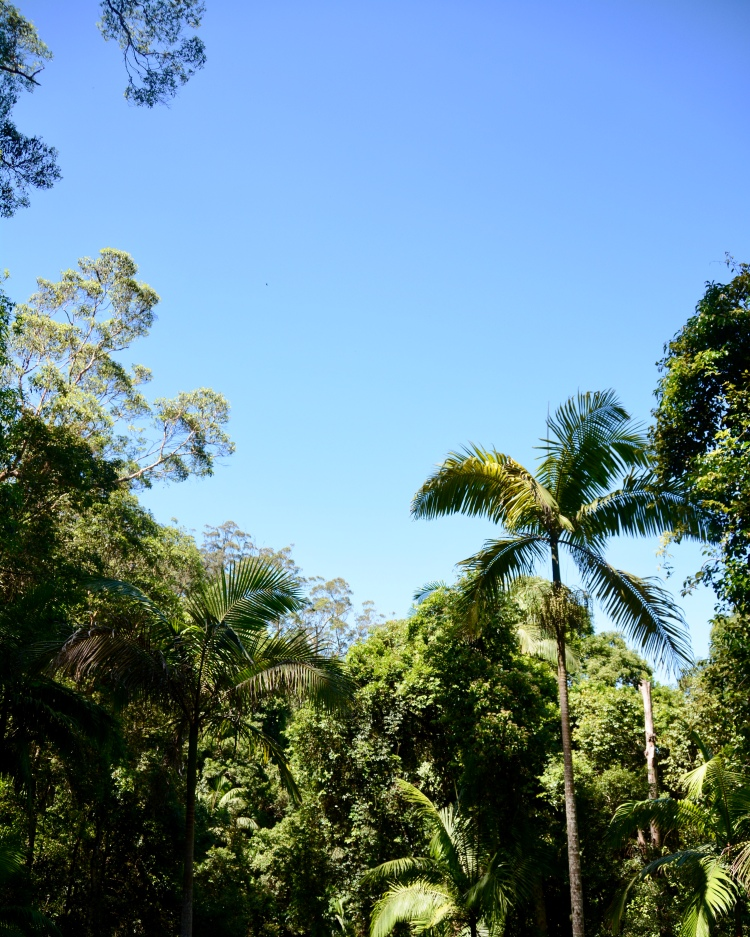 Mt Glorious, Brisbane